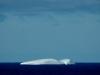 Antarctica Iceberg - Whale