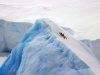 Antarctica Iceberg - Good Luck