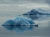 Antarctica Iceberg - Silencio Corona