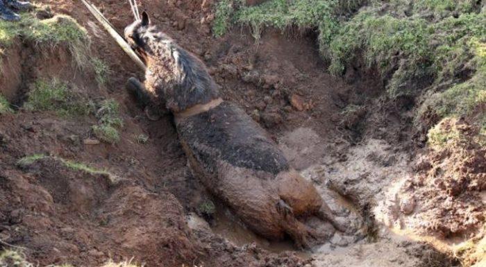 horse in sinkhole