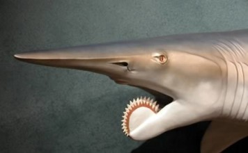 helicoprion: animal no shopped, weird animal, weird animal photo, animal not photoshopped, no photoshop animal photo