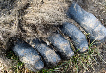 the bigfoot or sasquatch, bigfoot dna, big foot dna research, big foot dna science, bigfoot, sasquatch, bigfoot real, bigfoot research