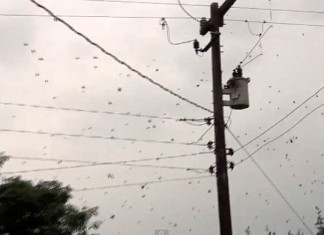 spider web brazil, raining spider brazil, raining spider brazil video, strange brazil video, huge spider web brazil video