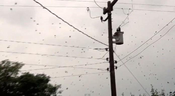 spider web brazil, raining spider brazil, raining spider brazil video, strange brazil video, huge spider web brazil video