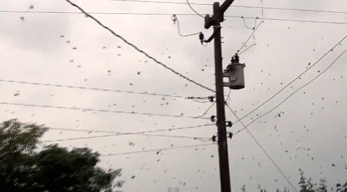 spider web brazil, raining spider brazil, raining spider brazil video, strange brazil video, huge spider web brazil video, spider, spider web, spider infestation, insect plague, spider plague, spider plague video