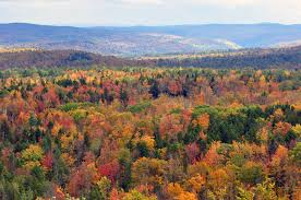 vermont, vermont forest photo, vermont photo, Beautiful forest in Vermont. Photo: Wikipedia