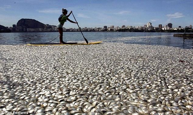 rio de janeiro laguna de freitas fish die-off