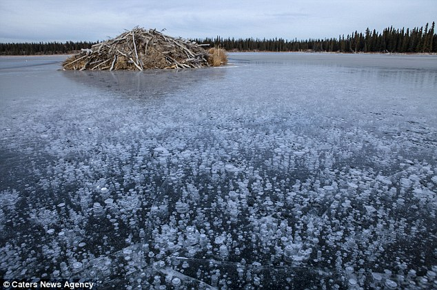 methane bubbles on frozen lake