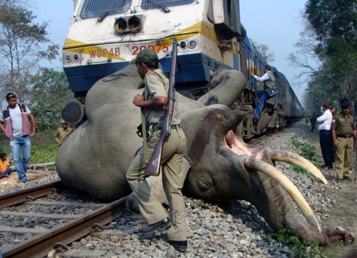 elephant, train collision, train collides with elephant, elephant death in India, Pictures of the day in India, elephant killed by train, elephant killed by train in India, train hits elephant in India, India accident train, elephant, elephant train accident