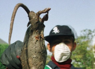 tehran giant rat, tehran giant rat plague, mutant rat tehran, mutant rat tehran plague