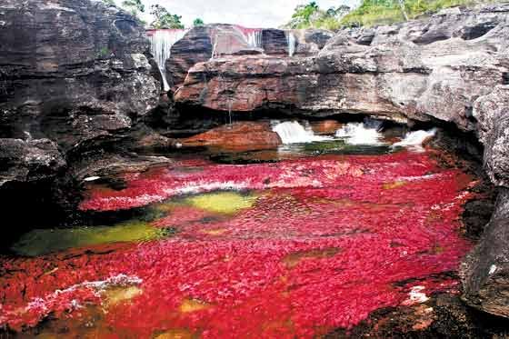 cano cristales mystic river colombia, cano cristales mystic river in columbia la macarena, cano cristales, cano cristales river, cano cristales river colombia, cano cristales colombia, the river of fivecolors, Caño Cristales, 'the river that ran away to paradise', 'The River Of Five Colors', 'The Most Beautiful River In The World', colored river in Macarena Mountains Columbia