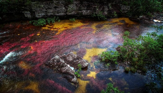 mystery places on earth cano cristales colombia la macarena, cano cristales mystic river in columbia la macarena, cano cristales, cano cristales river, cano cristales river colombia, cano cristales colombia, the river of fivecolors, Caño Cristales, 'the river that ran away to paradise', 'The River Of Five Colors', 'The Most Beautiful River In The World', colored river in Macarena Mountains Columbia