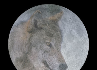 full moon almanac, full moon almanach, full moon almanach native americans, full moon names, full moon, The wolf moon in January, full moon almanach, full moon almanach native americans, moon, full moon, full moon names, full moon meanings, full moon season, full moon meaning, full moon description, full moon phot, seasonal full moon names, full moon almanac, The Full Cold Moon or the Full Long Nights Moon in December,the full moon cold is the full moon in december, Full Beaver Moon in November, full bearver moon is the full moon in november, full moon hunter is the full moon of october, Full Hunter's Moon or Full Harvest Moon in October, full moon harvest is the full moon of september, Full Corn Moon or Full Harvest Moon in September, the full moon sturgeon is the full moon of august, Full Sturgeon Moon in August, full moon buck is the full moon in July, The Full Buck Moon in July, full moon strawberry is the full moon in june, Full Strawberry Moon in June, full moon flower is the moon of mai, Full Flower Moon in May, full moon pink is the full moon of april, Full Pink Moon in April, worm full moon is the full moon in March, Full Worm Moon in March, snow full moon is the full moon of febrary, Full Snow Moon in February,wolf full moon is the full moon of january, Full Wolf Moon in January