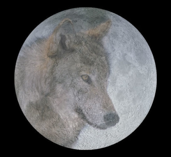 wolf full moon is the full moon of january