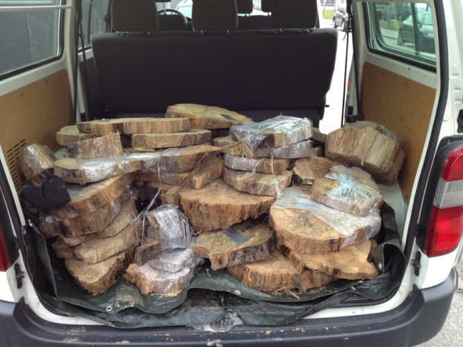 huge quantity of the oldest wood in the world was carry for research