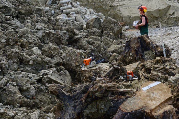 archeological sensation in Zurich: the oldest forest in the world unveil?