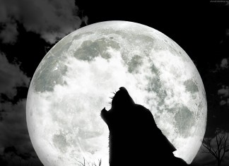wolf, wolf howhling