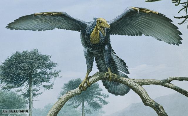 Archaeopteryx, what are Archaeopteryx? Archaeopteryx dinosaur, new flying dinosaur, new earliest known bird found in China