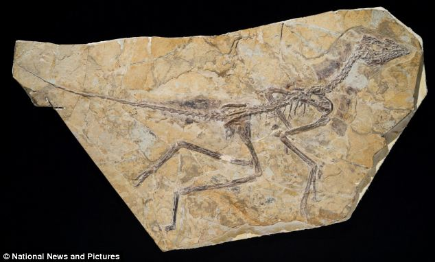 amazing discovery of new flying dinosaur in China