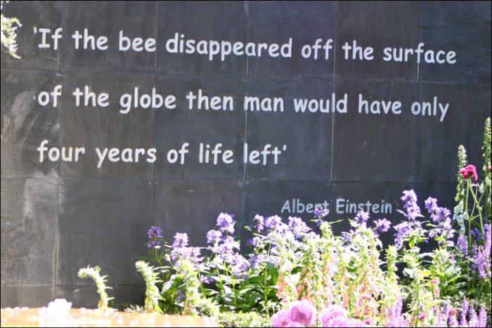 bees einstein quote