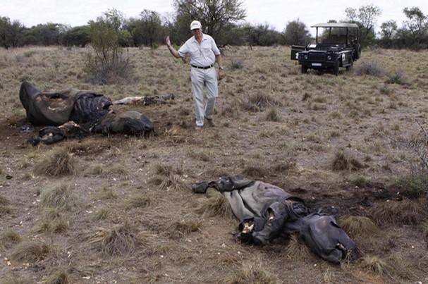 Mozambique Rhinos poaching, poach, poachers