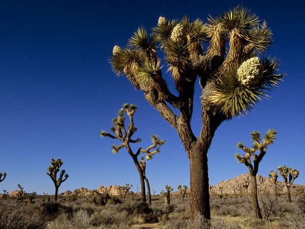 joshua tree national park usa