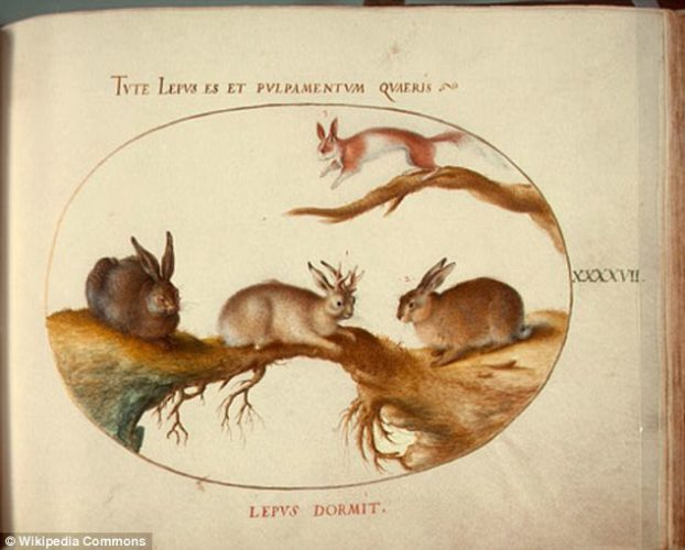 photo of mythical jackalope which is a rabbit with the antlers of an antelope