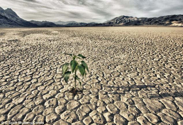Solid rain (powered rain) is a  new absorbent polymer called potassium polyacrylate and could be the solution against drought and famines around the world