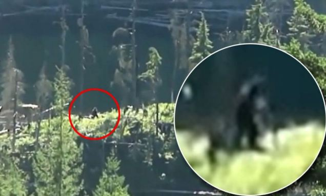 eerie video of sasquatch in canadian wilderness, sasquatch news, big foot video and news, new footage of sasquach in Canada, mysterious animal caught on tape, sasquatch new video, new video of sasquatch, new video of bigfoot, new video of mysterious bigfoot, new photo of bigfoot, new image from sasquatch in canadian wilderness, Hiking couple claim new footage shows Bigfoot out for a walk in the wilds of Canada