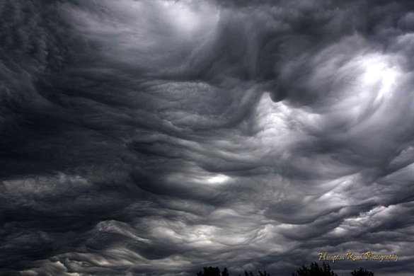 best undulatus asperatus photo