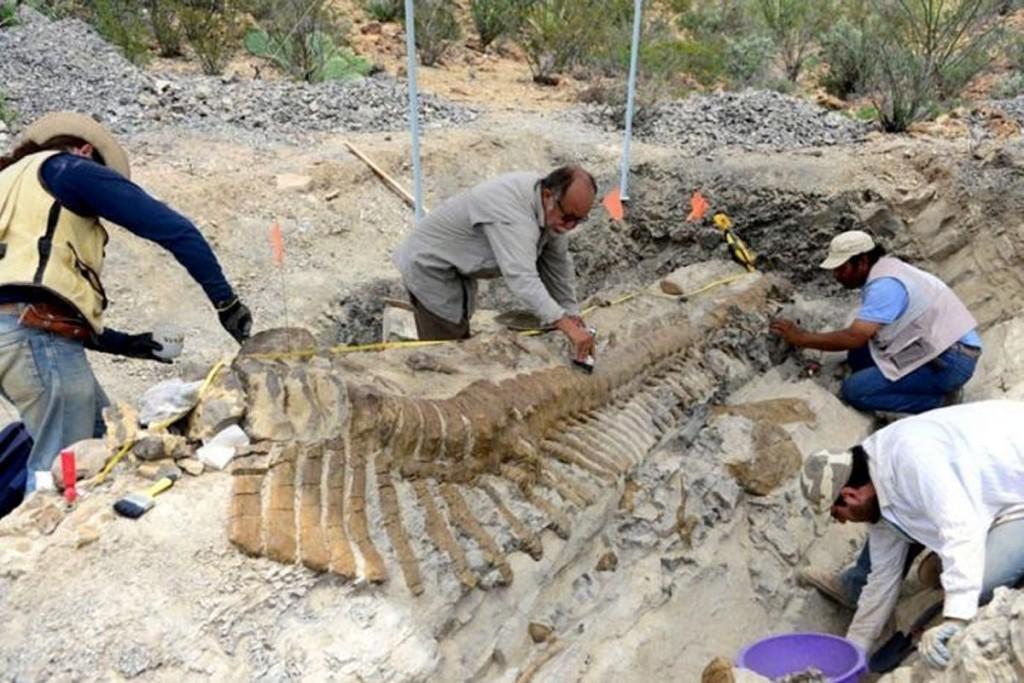 dinosaur tail found in mexico desert july 2013, dinosaur tail mexico, discovery of dinosaur tail in mexico, mexican paleonthologists discover dinosaur tail in mexican desert