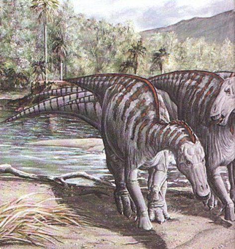 dinosaur tail found in the desert of Coahuila, dinosaur tail mexico, dinosaur tail dinosau tail in the desert of Coahuila, desert of Coahuila dinosaur, dinosaur remains in mexico, mexico dinaosaur tail, mexico dinosaur