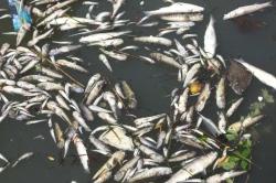 fish die-off venice italy