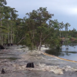 La sinkhole update: Louisiana sinkhole swallows tree in seconds (video)