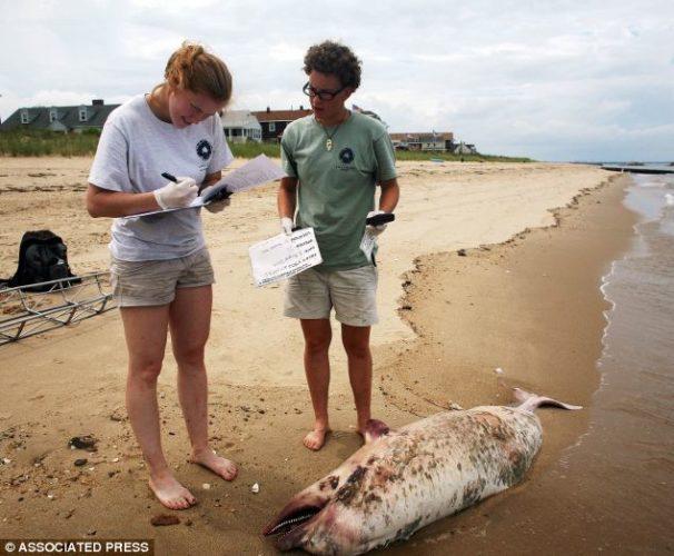 Mystery of the dead dolphins: Scientists suspect killer virus on US East Coast, what kills dolphin on us east coast?