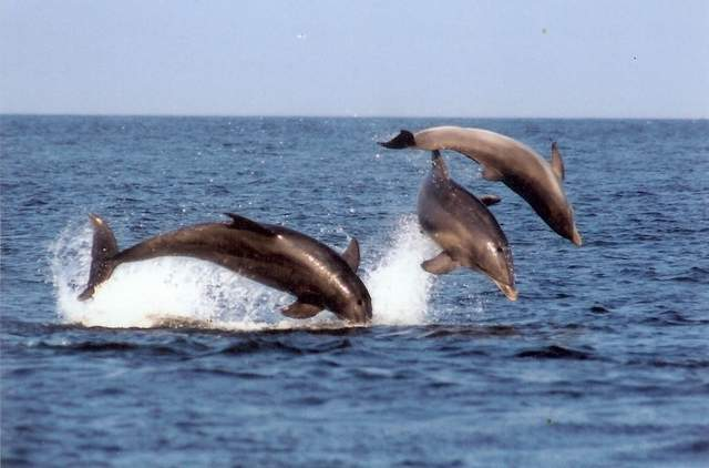 dolphins of Delaware coast