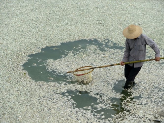 dead fish in china, fish mass die-off in china, 100'000 kg fish dead in china river fuhe, fuhe river fish die-off, fuhe river fish kill, Fischsterben in china