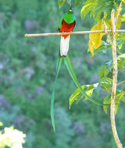 Quetzal sound Kukulkan Pyramid Chichen-Itza, Kukulkan Pyramid Chichen-Itza chirping sound video