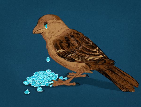 Bird Crying