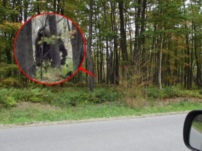 New bigfoot sighting Near Kinzua Bridge State Park september 2013, New bigfoot sighting 2013, New bigfoot sighting september 2013, New bigfoot sighting pennsylvania september 2013, New bigfoot sighting Near Kinzua Bridge State Park, New bigfoot sighting pennsylvania september 2013, sasquatch sightings in pennsylvania september 2013