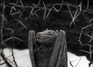 Calcified bat at lake natron tanzania by Nick Brandt, Nick Brandt photo, Nick Brandt calcified animals, Nick Brandt calcified animals lake Natron, Nick Brandt calcified animals lake Natron tanzania, ACROSS THE RAVAGED LAND, nick brandt ACROSS THE RAVAGED LAND, nick brandt photo