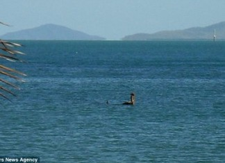 Loch Ness monster in Australia, Nessie in australia, nessie sightings in Australia, Loch Ness monster in Australia, water monster in magnatic island australia, nessie spotted off magnetic island in australia, photo of Nessie-like creature spotted off Australia's Magnetic Island