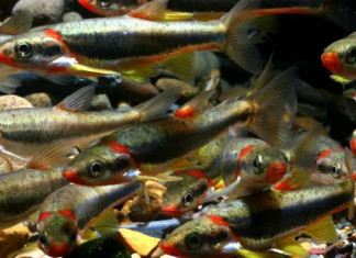 fracking, mass die-off, fish mass die-off, fracking kills fish in Kentucky, fracking kills fish in Acorn Fork kentucky, Hydraulic Fracturing Fluids Likely Harmed Threatened Kentucky Fish Species, fracking kills endangered fish species in Kentucky