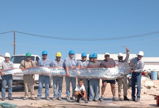 Oarfish, Oarfish 2012, Oarfish beach 2014, photo of oarfish in China January 2014, oarfish january 2014, Oarfish stranding in China June 2012