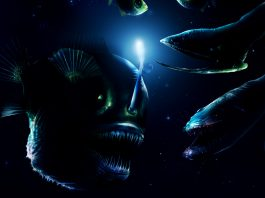 There are still many undiscovered sea monsters, deep sea monster discovery