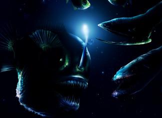 deep sea monsters, deep sea creatures, deep sea fish