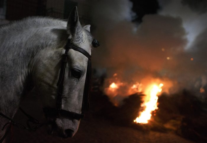 luminarias festival spain horse january 2014, luminarias festival, Luminarias religious celebration on the eve of Saint Anthony's Day, luminarias festival in San Bartolome de los Pinares, San Bartolome de los Pinares luminarias festival, horse purification and protection by fire, During the Luminarias religious festival horses are purified by riding though fire