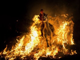 luminarias festival spain january 2014, The Luminarias festival spain january 2014 Luminarias spain, luminarias festival photo, luminarias festival video, The amazing festival where they celebrate the patron saint of animals... by riding horses through FIRE, horse ride through fire, luminarias: horse ride through fire, amazing spanish festival where horse go through fire, Luminarias 2014: The amazing festival where they celebrate the patron saint of animals by riding horses through FIRE in Spain