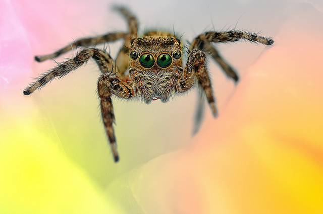 spider, spider photo, photo of spider, best photo of malaysian spiders, malaysia spider photo, spider by Jimmy Kong