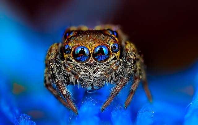 spider photo, spider, fascinating spiders, best spider photo 2014, spider photo Jimmy Kong, spider photo by Jimmy Kong